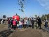 grzybobra-drzewa-dzwirzynoi2015-1284